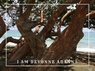 Trees at Fort Granby, Tobago as captured by Devonne Adanna
